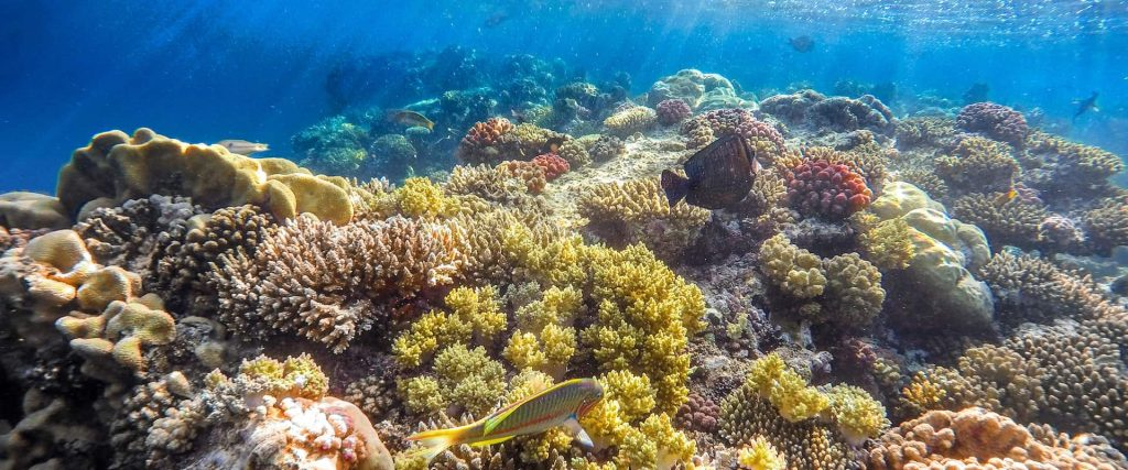 Stunning Coral Reefs in the Red Sea's Blue Water