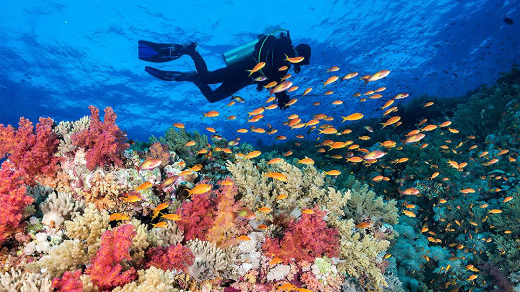 Diver Sees Marinelife in The Red Sea